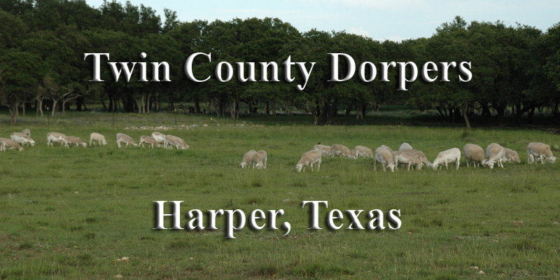 Twin County Dorpers is located in Harper, Texas.